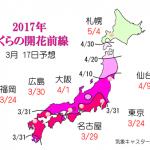 WCN さくらの開花予想2017 第6回