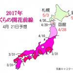WCN さくらの開花予想2017 第11回