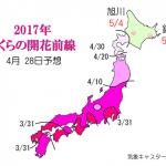 WCN さくらの開花予想2017 第12回